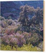 San Diego County Canyon Wood Print
