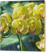 San Diego Yellow Orchids Wood Print