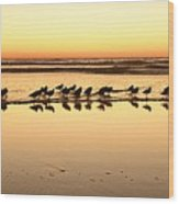 San Diego Shorebirds Wood Print