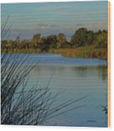 San Joaquin Wildlife Sanctuary Wood Print