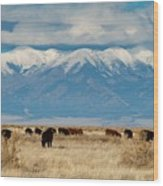 San Luis Valley And Cattle Wood Print