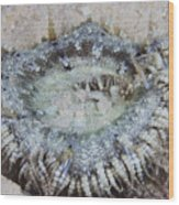 Sand Anemone, Bonaire, Caribbean Wood Print by Terry Moore