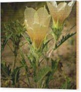 Sand Blazing Star Flower 1 Wood Print