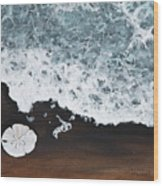 Sand Dollar Wood Print by Darice Machel McGuire