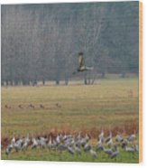 Sand Hill Crane Migration Wood Print