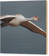Sand Hill Crane On Approach Wood Print