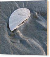 Sanddollar Wood Print