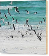 Sandestin Seagulls B Wood Print
