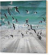 Sandestin Seagulls C Wood Print