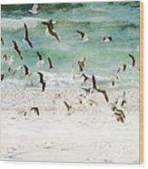 Sandestin Seagulls D Wood Print