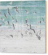Sandestin Seagulls E Wood Print