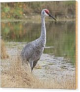 Sandhill Beauty By The Pond Wood Print