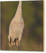 Sandhill Crane 2 Wood Print