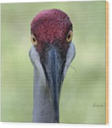 Sandhill Crane 4 Wood Print