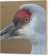 Sandhill Crane 6 Wood Print