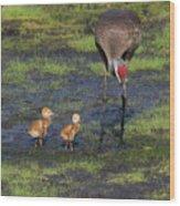 Sandhill Crane And Babies Wood Print