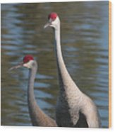Sandhill Crane Couple By The Pond Wood Print