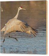 Sandhill Crane Dance Wood Print