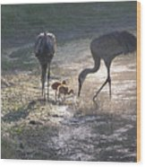 Sandhill Crane Family In Morning Sunshine Wood Print by Carol Groenen