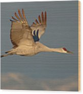 Sandhill Crane Flying Above The Mountains Of New Mexico Wood Print
