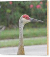 Sandhill Crane In Sarasota Wood Print