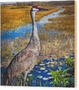 Sandhill Crane In The Glades Wood Print