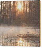 Sandhill Crane On Nest Wood Print