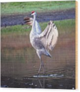 Sandhill Crane Painted Wood Print