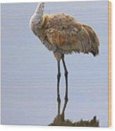 Sandhill Crane Posing Wood Print