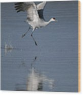 Sandhill Crane Running On Water Wood Print