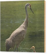 Sandhill Crane With Baby Chick Wood Print