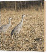 Sandhill Cranes  2015-2 Wood Print