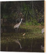 Sandhill Cranes And Chicks Wood Print