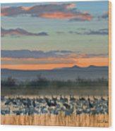 Sandhill Cranes And Snow Geese Wood Print
