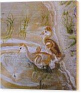 Sandhill Cranes Chicks First Bath Wood Print