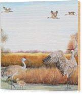 Sandhill Cranes-jp3159 Wood Print