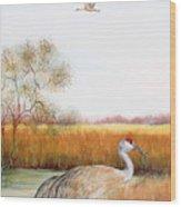 Sandhill Cranes-jp3160 Wood Print