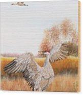 Sandhill Cranes-jp3161 Wood Print