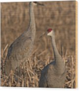 Sandhill Cranes On Watch Wood Print