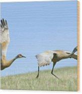 Sandhill Cranes Taking Flight Wood Print