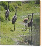 Sandhill Family By The Pond Wood Print