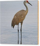Sandhill Standing In Peaceful Pond Wood Print