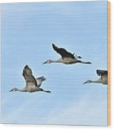 Sandhills In Flight Wood Print