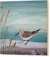 Sandpiper And Conch Wood Print