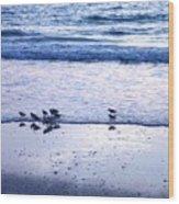 Sandpiper Beach I Wood Print