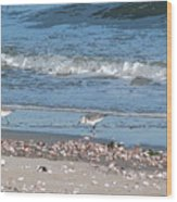 Sandpipers And Seashells - Poster Wood Print