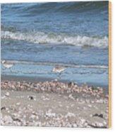 Sandpipers At The Seashore Wood Print