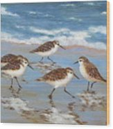 Sandpipers Wood Print by Barrett Edwards