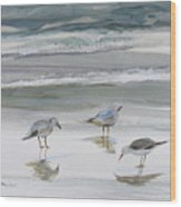 Sandpipers Wood Print by Julianne Felton