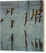 Sandpipers Shore Bound Wood Print